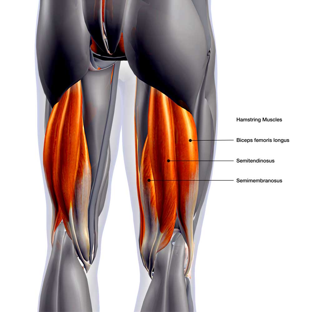 PULLED HAMSTRING? Torn hamstring common injury advice
